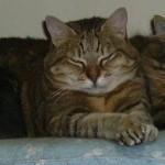 Manga 3 - vive le chat
