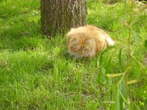 Gremelin 2 - vive le chat
