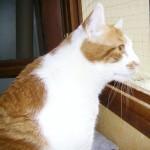 tango chat à adopter