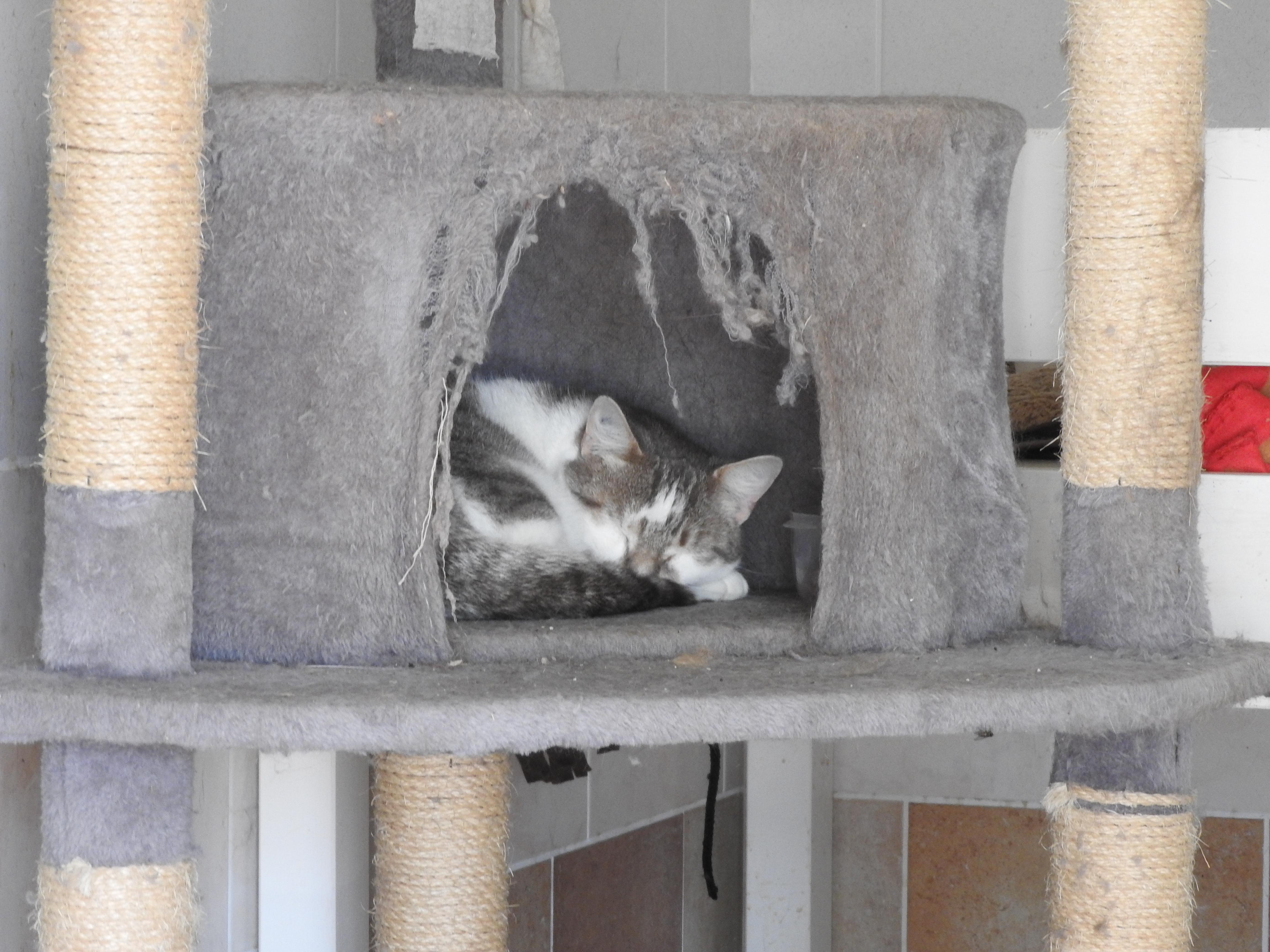 vive le chat association chats a l adoption pour donner aux chats la chance de vivre. Black Bedroom Furniture Sets. Home Design Ideas