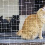 Pompon 3 - vive le chat