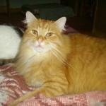 Pompon 5 - vive le chat