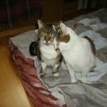 bambine 4 - vive le chat