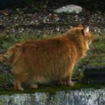 Pompon 1 - vive le chat